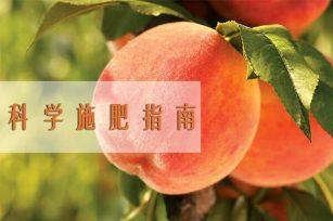 桃树施肥的正确方法!