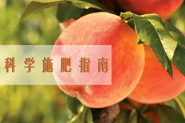 桃树施肥_桃树有机肥_果树的施肥