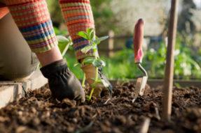 选择适合自己的的肥料类型