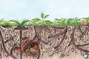 揭秘关于蚯蚓的一切知识