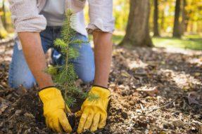 种植树木也要选对时间