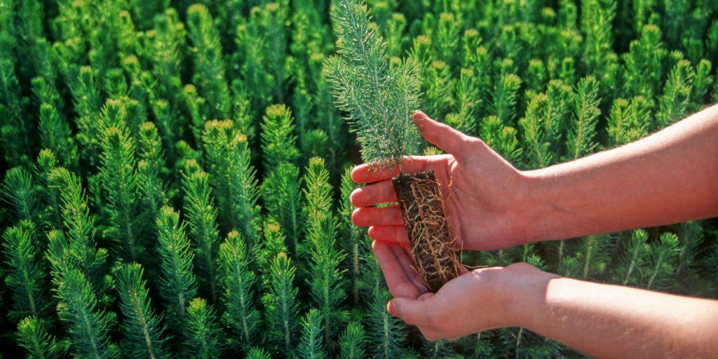 绿康有机肥每周一堂课_种植树木也要选对时间
