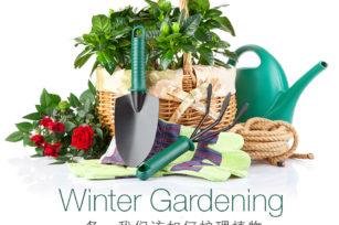 冬天是室内植物最脆弱的时候,我们该如何护理