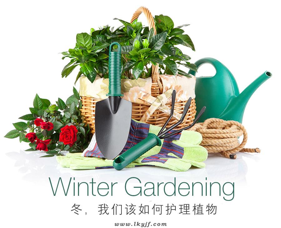 冬天植物如何护理