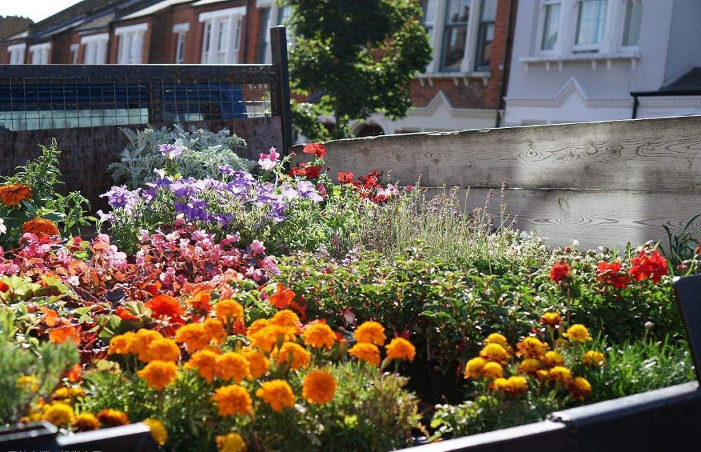 成都绿康有机肥园艺_让室内变成户外感受最好的植物有那些?
