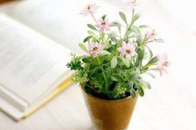 园艺日记 – 让室内变成户外感受最好的植物有那些?