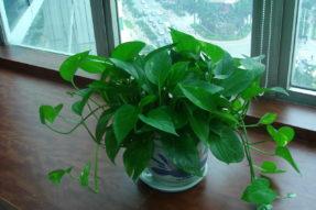 盘点三种又好养又能改善室内空气的植物