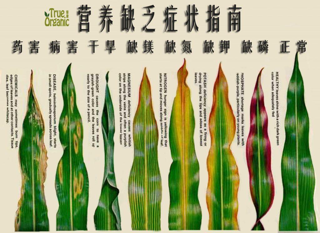 植物元素缺乏和过量叶面症状