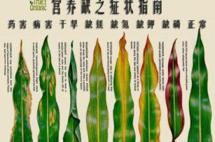 植物元素缺乏叶面症状