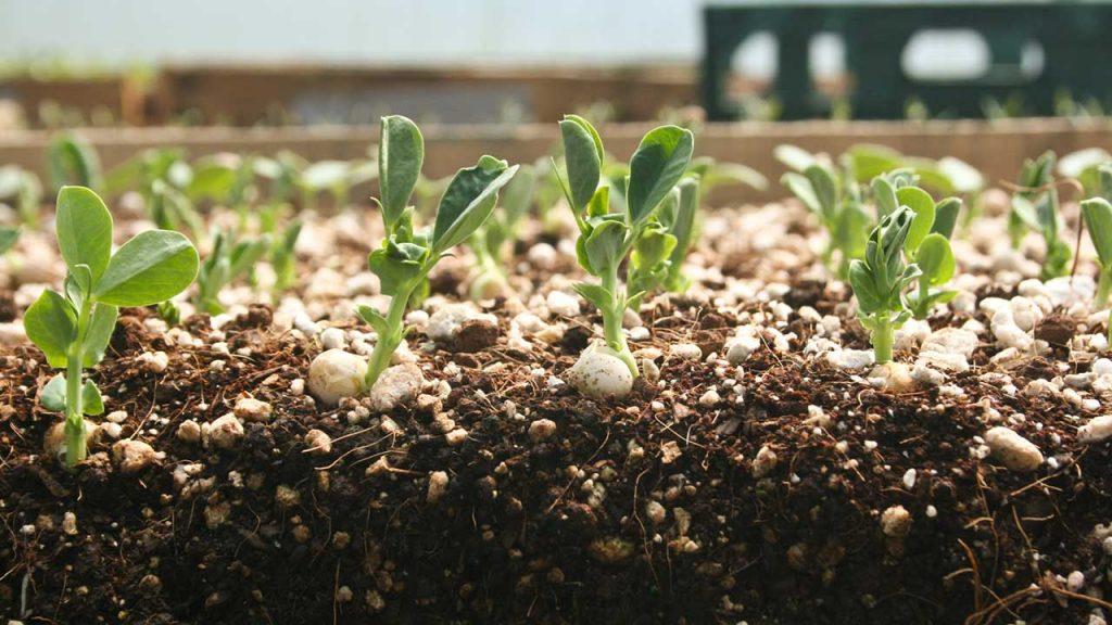 成都市绿康有机肥有限公司_室内播种注意事项_室内育苗