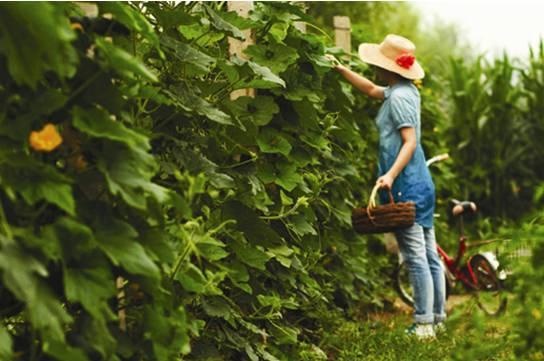 四川绿康有机肥有限公司_有机农场的正确定义