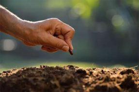 土壤园艺百科,不能忽视的土壤盐害