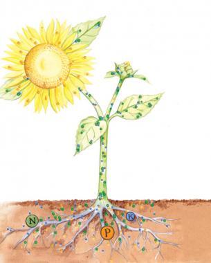 植物为什么需要肥料_NPK常量元素