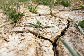 八种土壤问题