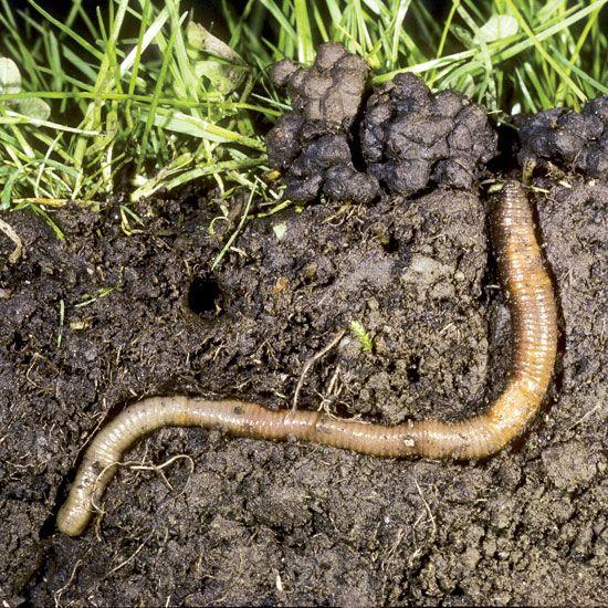四川蚯蚓粪有机肥_首选成都市绿康有机肥有限公司