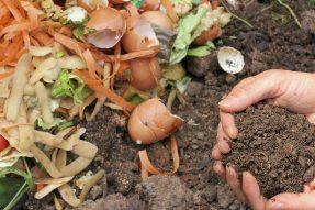 DIY教学|绿康有机肥如何简单堆肥你的厨余垃圾