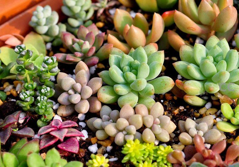 成都市绿康有机肥有限公司_泥炭土_草炭土和园艺