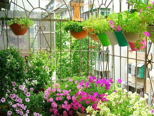 成都绿康有机肥带你成为一个园艺爱好者!让你更爱上生活的乐趣!