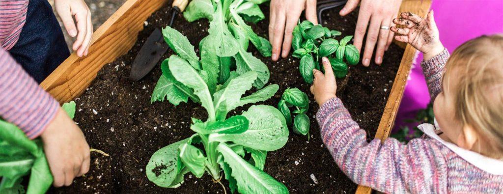 一个园丁的肥料指南_成都绿康营养土