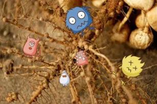 有益微生物是植物生长发育最佳伙伴