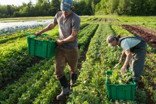 为什么今天的蔬菜营养较少?