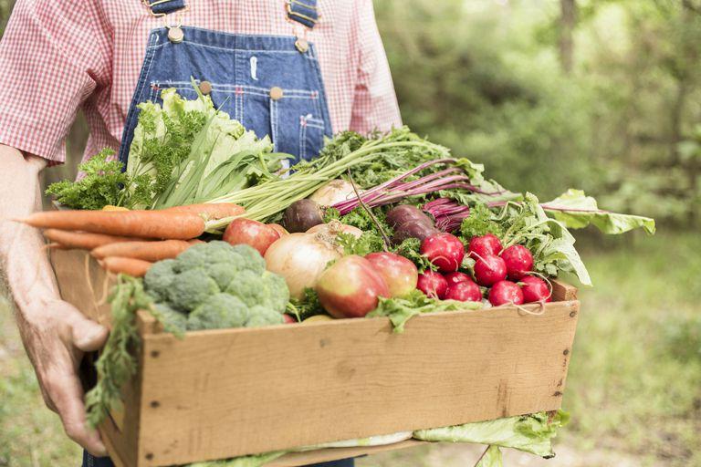 有机农业_成都绿康有机肥批发