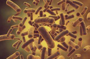 堆肥生物学原理:微生物种类
