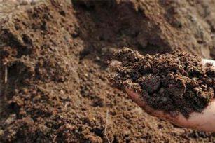 有机肥施用技术汇总