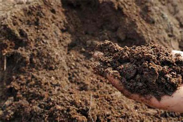 土壤有机质_土壤健康