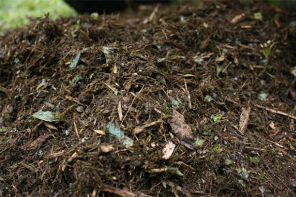 什么是有机物质_土壤有机质作用
