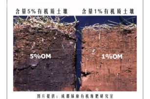什么是有机物质,它对我的花园土壤有什么作用?