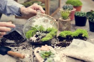 园艺种植的最佳土壤是什么,如何让它变得更好