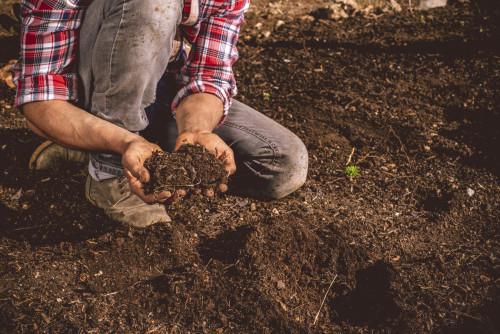 有机肥使用没效果时什么原因