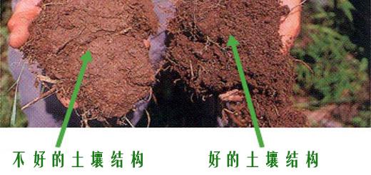 土壤结构_区别土壤结构好坏