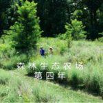 森林生态农场第四年