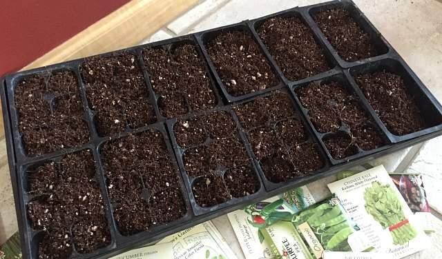 比较两种育苗播种培养基,那种更适合种子的开始