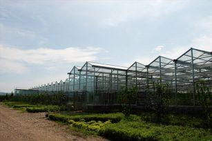 生态农业是新型现代化农业,具有较高的生态效益、经济效益与社会效益