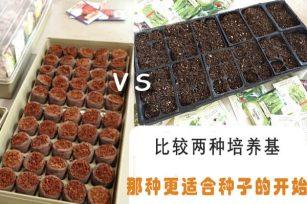 比较两种培养基,哪种更适合种子的开始