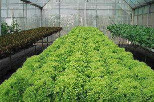 无土栽培农业与传统农业到底有什么不同