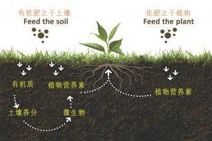 汗水被药水代替,有机肥被化肥代替,谁之过?