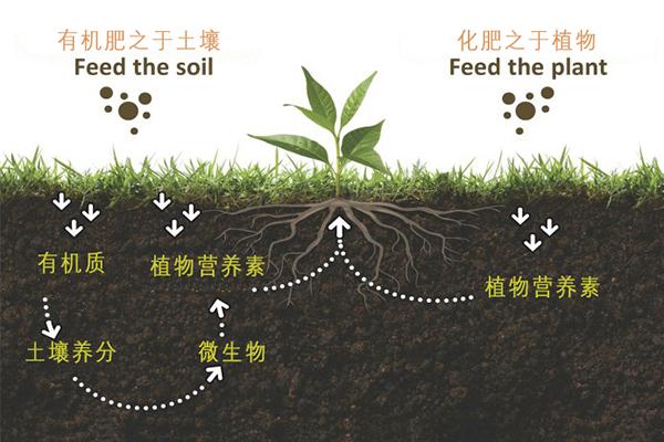 有机肥和化肥区别