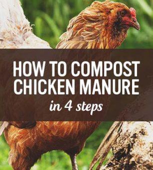 真正循环农业,养鸡不用粮吃啥?