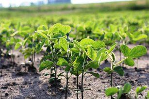 植物幼苗该怎么施有机肥?