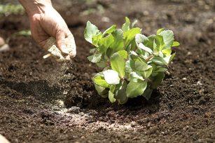 你知道有机肥最正确施用方法吗?