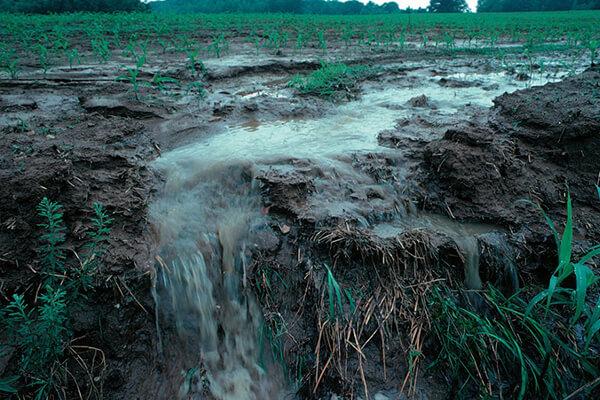 有机肥能减少土壤养分流失