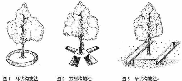 苹果树施用有机肥技术方法详解_沟施,穴施,条施