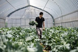秋天施基肥很重要,如何正确施有机肥!
