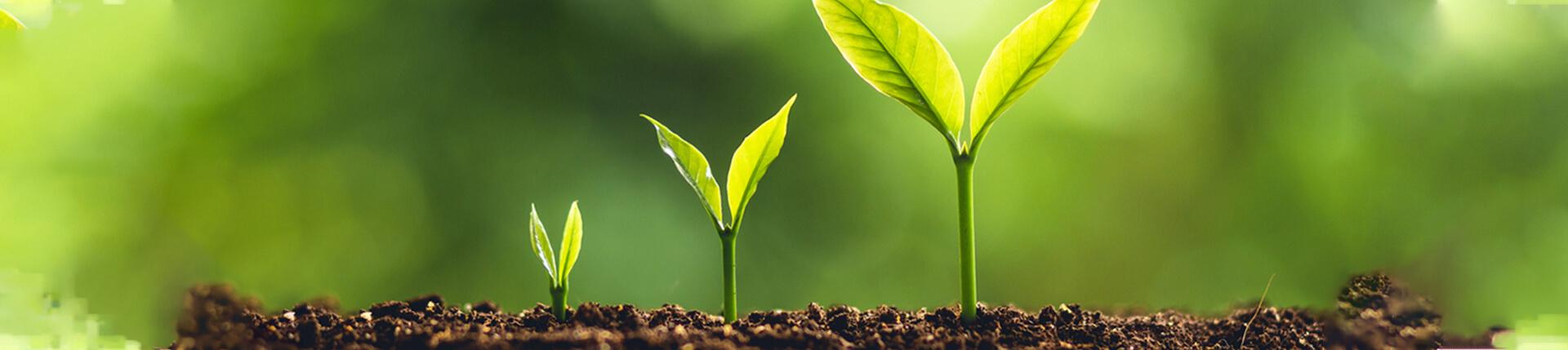 育苗基质_基质肥料_栽培基质_有机基质