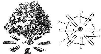 有机肥施肥方式_有机肥放射状沟施肥
