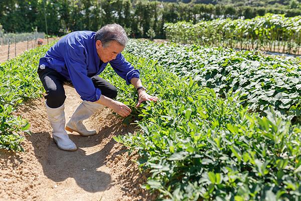 有机肥_生物有机肥_有机肥料